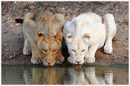 Der safari-park «Tajgan» *(klicken sie auf das foto, was würde die karte in voller größe)
