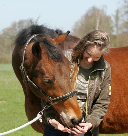 paardensportmassage paarden sportmassage massage paard