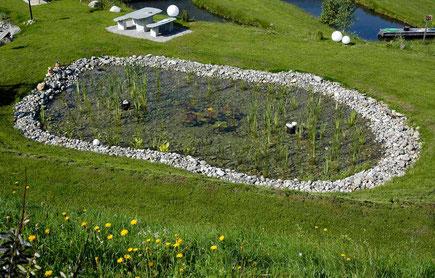 Zona de regeneración con plantas acuáticas. Biopiscina. Piscina natural.