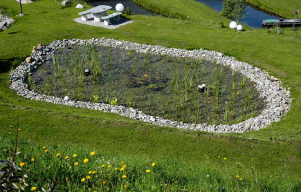 Sistema de depuraci n natural bionova piscinas naturales for Biopiscinas construccion