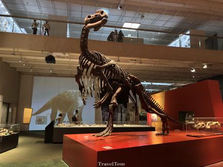 Queensland Museum dino