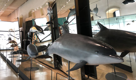 Dolfijnen in natuurhistorisch museum Santa Cruz de Tenerife
