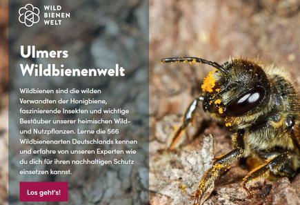 Ausschnitt von der Homepage Wildbienenwelt (Quelle Ulmer Verlag)