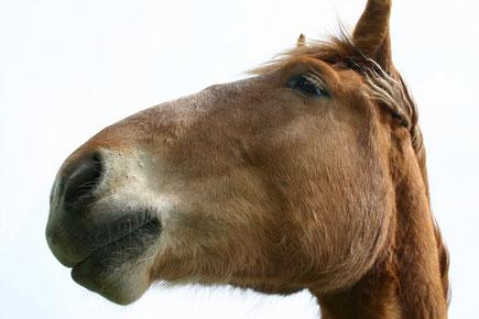この馬はイメージです。写真撮る余裕もなく~(^^;