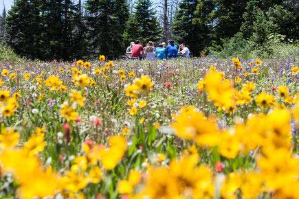 Blumenwiese, Picknick, Menschen, Nachhaltigkeit, farbenfroh, fröhlich