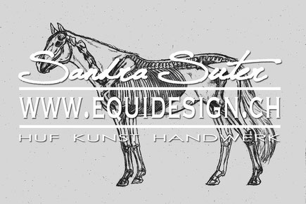 illustration pferd körper anatomie naturwissenschaftliches zeichnen wissenschaftliche zeichnungen skizzen pferd knochen hufe körper gelenke