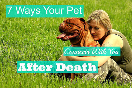 7 Ways Your Pet Connects With You After Death