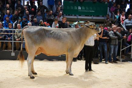 Jungzüchter Simon Meusburger auf dem Championat in Dornbirn mit seiner Kuh Moni