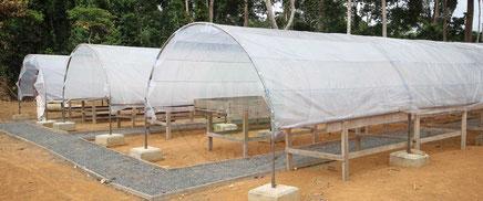Centre d'excellence pour le traitement post-récolte de cacao