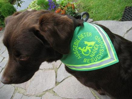Besuchshund Ausgebildeter, Therapiehund, Behinderten Begleithund