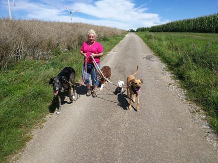 Spaziergang an den Feldern