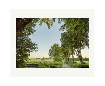 Landschaft am Schaalsee: Sommer