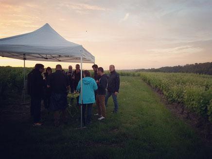 professionnels-repas-séminaires-reunions-entreprises-evenementiel-animation-oenologie-accords-mets-et-vins-Rendez-Vous-dans-les-Vignes-Myriam-Fouasse-Robert