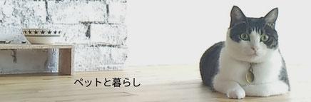 丸太で制作した猫ベンチ、が評判です