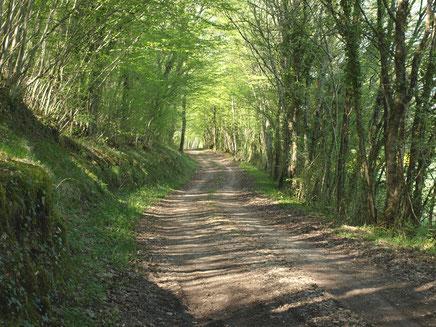 Chemin de randonnée en Donziais