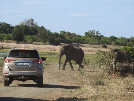 Unterwegs mit dem Mietwagen - Kruger Nationalpark