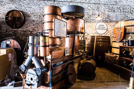 dartigalongue, bas armagnac, gers, nogaro, distillerie, ditillerie nogaro, distillerie dartigalongue, terroir,rachel jabot ferreiro, erjihef photo