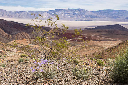 californie, desert mojaves,panamint valley, rtl2, hit z road california, poprock station, usa, états unis, rachel jabot ferreiro, erjihef photo