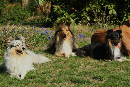 Quirina (Quinie), Beauty Balesco (Cody) und Beauty Ziva