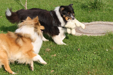 Nala und Willow