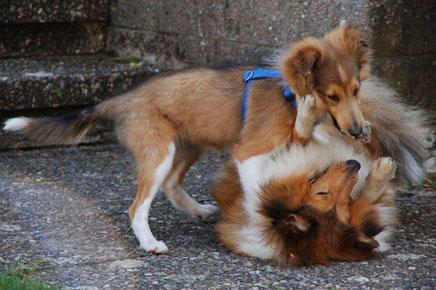 Aber Lassie entwickelt sich gut und Ascii wirkt durch sie wieder jung.