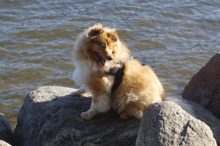Xavier Linus an der Ostsee.