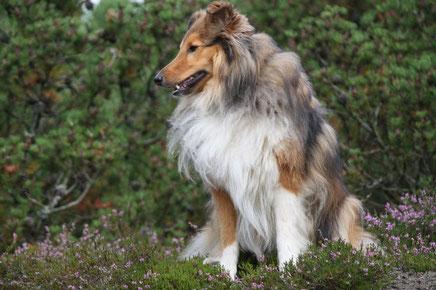 Yukon (Leo)