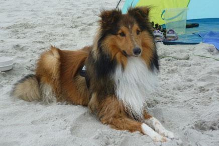 Rocky of Atocha genießt seinen Urlaub an der See.