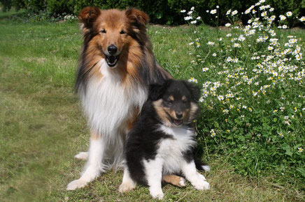 Father and Son - Antares (13 Jahre) und Bo (9 Wochen)