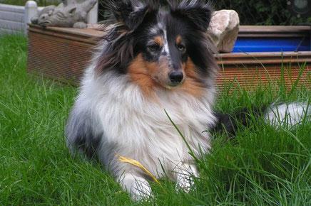 Leo (Merlin) ist mittlerweile 43 cm groß und wiegt 9,4 kg. Er hat sich prächtig entwickelt und ist der Sonnenschein in seiner Familie.