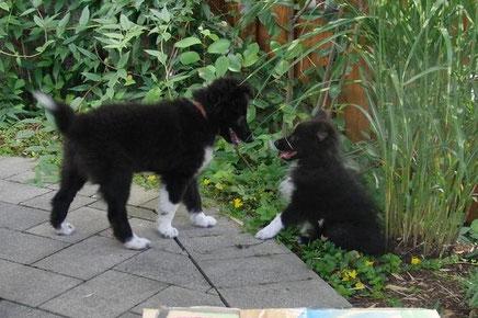 Amy wusste am Anfang noch nicht genau was sie von dem wilden Oskar halten sollte. Doch seit dem Treffen hat Amy eine deutlich größere Klappe anderen Hunden gegenüber.