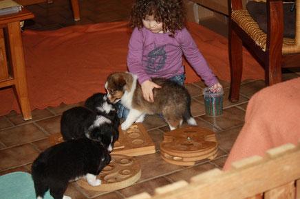 Bei diesem verregneten Sommer ist Spielen im Wohnzimmer angesagt. Isabeau beschäftigt sich mit den Welpen. Futterspiele sind sehr begehrt.