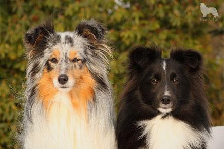 Zwei Schönheiten, Quiena Joy  und Bjelle vom Schafshügel