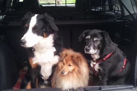Linus mit Bessy und Carina.