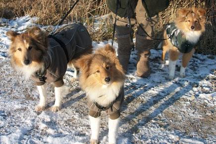 Karina, Betty und Balou sind bei diesem frostigen Wetter bestens geschützt