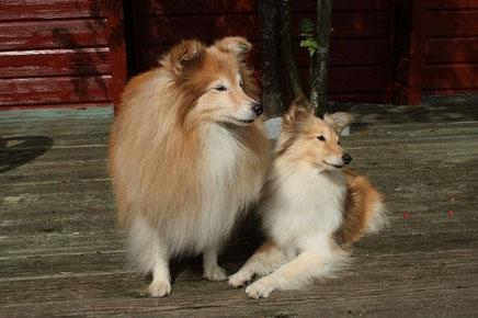 Besca mit ihrer Tochter Amy of Shellys Dreamland
