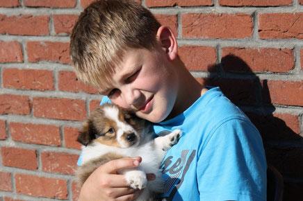Kinder lieben Shelties und die Shelties ihre Kinder - Pascal mit Rusty