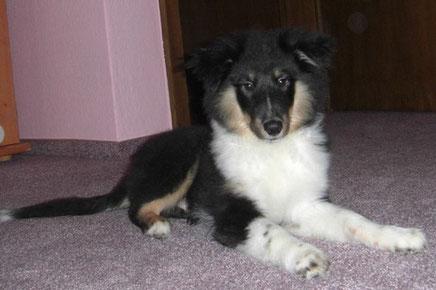 Anouk ist ein ganz lieber Kerl. Seine Besitzer sind sehr glücklich, dass sie einen so tollen Hund gefunden haben!