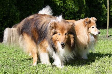 Zwei Oldies - Antares (fast 14 Jahre) und Besca (12 Jahre alt)