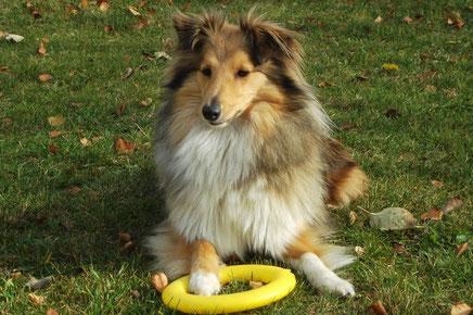 Sie ist ein fröhlicher Hund, der auch gerne bis zum Bauch ins Wasser geht, mit anderen Hunden herumtobt oder Ball spielt.