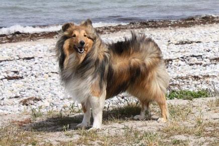 Yukon of Atocha (Leo) hat seinen Urlaub auf Fehmarn verbracht.