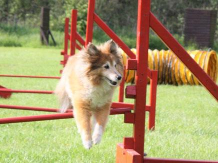 """Samira of Atocha (Alisha) beim """"Spaßhopsen"""". Sie springt nur, wenn sie will!"""