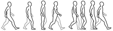 以前に作っていた歩行のイラストです。改めて歩行は全身運動だということがよく分かります。