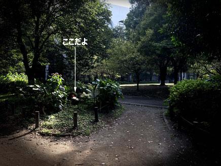 10月2日(金)のお散歩で撮影したよ。開花日数は1週間くらい?なら、もうしばらく大丈夫だよ♪