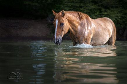 Foto made by www.animals-art.ch