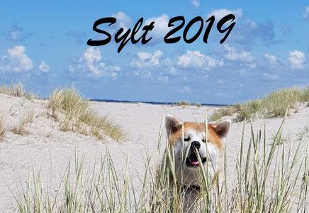 Sylt, Juni 2019