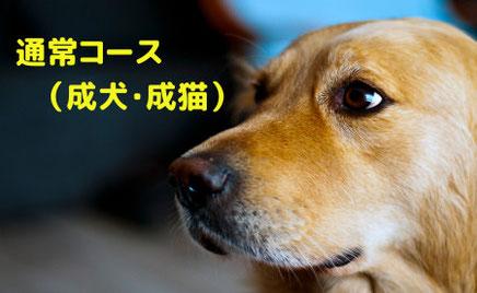 成犬&成猫向けトレーニングコース