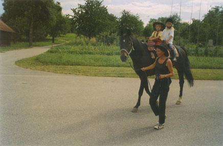 *1992 Baden Württemberg gelding