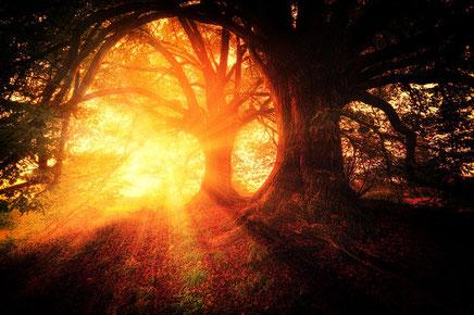 Freiheit, Leichtigkeit, Träume, Weg, Natur, Sonne