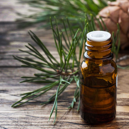 Kiefernrindenextrakt in Ladylike Nahrungsergänzung, gegen Stimmungsschwankungen, Hitzewallungen und Wechseljahresbeschwerden